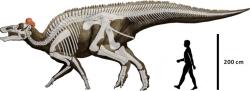 V případě, že by planetka Chicxulub dopadla do některé části oněch 87 % povrchu s běžným obsahem kritických prvků, dinosauři by možná přežili. Zde jeden z posledních žijících druhů kachnozobých dinosaurů, severoamerický Edmontosaurus regalis. Kredit: Hai Xing, Jordan C. Mallon, Margaret L. Currie (http://journals.plos.org/plosone/article?id=10.1371), Wikipedie (CC BY 2.5)