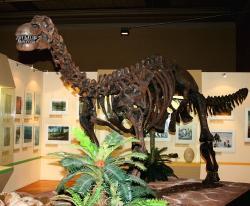 Fylogenetická analýza ukázala, že mezi nejbližší vývojové příbuzné volgatitana patřil jihoamerický druh Epachthosaurus sciuttoi. Tento menší zástupce kladu Lithostrotia žil o 40 milionů let později na území současné argentinské Patagonie. Formálně popsán byl na základě nálezu fosilií ze souvrství Bajo Barreal v roce 1990. Na fotografii je rekonstruovaný kosterní exemplář z bývalé expozice Národního muzea v Praze (rok 2008). Kredit: Karelj; Wikipedie (volné dílo)