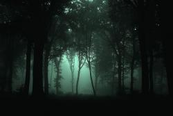 Temný les. VAlsasku. Kredit: JovanCormac / Wikimedia Commons.