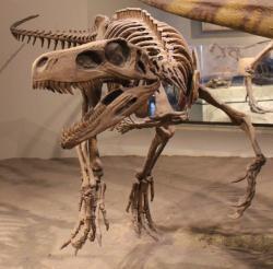 Objevy dinosaurů, jako je Herrerasaurus ischigualastensis z Argentiny, výrazně prodloužily předpokládanou dobu existence této skupiny. Nejstarší dnes známé fosilie dinosaurů jsou staré asi 235 až 230 milionů let. Kredit: Jonathan Chen; Wikipedie (CC BY-SA 4.0)