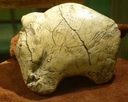 Asi 26 tisíc let stará podobizna mamuta vyřezaná do mamutího klu pravěkým člověkem v oblasti dnešního Předmostí u Přerova. Tento a další podobné umělecké předměty dokládají častou a intenzivní interakci mezi mamuty a pravěkými lidmi. Artefakt v expozici rakouského Krahuletz-Museum (Eggenburg). Kredit: Wolfgang Sauber, Wikipedie (CC BY-SA 4.0)