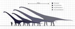 Porovnání velikosti několika druhů rodu Mamenchisaurus dokládá, o kolik větší byl M. sinocanadorum ve srovnání s dalšími druhy tohoto asijského sauropoda. Zde je navíc zobrazen pouze konzervativní odhad velikosti tohoto druhu, podle některých badatelů totiž mohl být ještě výrazně (zhruba o třetinu) větší. Kredit: Steveoc 86, Wikipedie (CC BY-SA 3.0)