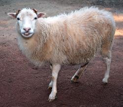 Jaká práva má zvíře? (Kredit: André Karwath, Wikipedia, CC BY-SA 2.5)