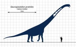 Úžas dětí nad obrázky některých dinosaurů je zcela pochopitelný. Dokážete si představit, že i tak obrovský táta, jako byl ten váš, je například oproti sauroposeidonovi jenom nicotným trpaslíkem? Kredit: Steveoc 86, Wikipedie (CC BY-SA 3.0)