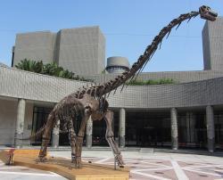 Rekonstruovaná kostra sauropoda druhu Qiaowanlong kangxii, jednoho z 11 druhů dinosaurů, jejichž rodové jméno začíná na písmeno Q. Tento zástupce kladu Macronaria žil na území současné čínské provincie Kan-su v době před 100 miliony let, tedy na rozhraní spodní a svrchní křídy. S délkou kolem 12 metrů a odhadovanou hmotností 6 tun však patřil k velmi malým sauropodům. Kredit: SSR2000; Wikipedie (CC BY-SA 3.0)