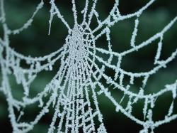 Předností pavoučích vláken je jejich jemnost pružnost a pevnost (průměr vlákna je přitom pouhé3 až 4mikrony) Kredit: Yintan, Wikipedia, CC BY 4.0.