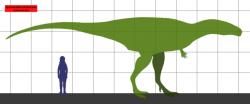 Přibližné velikostní srovnání dospělého člověka a tyranotitana. Tento teropod zřejmě dosahoval délky kolem 12 metrů a hmotnosti přes 5 metrických tun. Kredit: Conty, Wikipedie (CC BY 3.0)