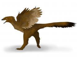 Podle výzkumů Christophera Organa a jeho týmu souvisela s menšími genomy plazopánvých dinosaurů (zejména drobných opeřených teropodů) jejich teplokrevnost a u některých druhů i pozdější schopnost aktivního letu. Zde anchiornitid druhu Yixianosaurus longimanus z rané křídy Číny. Kredit: Audrey.m.horn; Wikipedie (CC BY-SA 4.0)