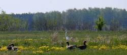 Příroda v okolí Pripjati (Ministerstvo životního prostředí Ukrajiny).