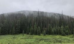 Pohled na následky kůrovcové kalamity v jedné z 28 sledovaných lokalit ve státě Colorado … (Kredit:  Seth Davis / Colorado State University)
