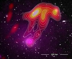 Rádiová medúza. Kredit: Torrance Hodgson, ICRAR/Curtin University.