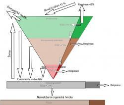 Tok energie v ekosystému ochuzeném odebíráním biomasy pro energetické využití.