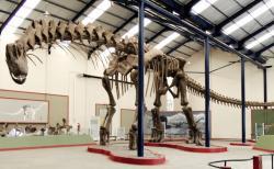 Gigantická kostra titanosaurního sauropoda druhu Argentinosaurus huinculensis v expozici muzea Museo Municipal Carmen Funes ve městě Plaza Huincul (provincie Neuquén, Argentina). Kostra je dlouhá bezmála 40 metrů a v nejvyšším bodě hřbetu dosahuje výšky 7,3 metru. Člověk si pod jejím hrudním košem připadá takřka nicotný. Kredit: Sellers et al. (2013); Wikipedie (CC BY 2.5)