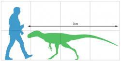 Velikostní srovnání malého tyranosauroida druhu Bagaraatan ostromi a dospělého člověka. Teropodní dinosaurus z pozdní křídy mongolské Gobi představoval zřejmě lovce menší až středně velké kořisti a potravně možná konkuroval mláďatům mnohem většího druhu Tarbosaurus bataar. Kredit: Paleocolour, Wikipedie (CC BY-SA 4.0)