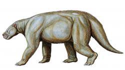 Skutečně velcí savci o hmotnosti nad půl tuny se objevují zhruba až 6 milionů let po události K-Pg. Jedním z nich byl i druh Barylambda faberi, býložravý savec z podřádu Pantodonta, obývající území dnešního Wyomingu a Colorada v USA v období paleocénu až eocénu (asi před 60 – 50 miliony let). Tento mohutný tvor, vzdáleně podobný tapírovi, měřil na délku asi 2,5 metru a vážil až kolem 650 kilogramů. Kredit: Dmitrij Bogdanov; Wikipedie (CC BY 3.0)
