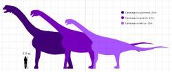 """Velikostní porovnání tří v současnosti platných druhů kamarasaura, a to navzájem i s dospělým člověkem. Největší druh C. supremus patřil mezi obří sauropody s odhadovanou hmotností v rozmezí 23 až 47 tun. Další dva druhy již byly výrazně menší, jejich odhadovaná dospělá hmotnost se pohybuje """"pouze"""" kolem 15 (C. grandis) a 13 tun (C. lentus). Kredit: PaleoGeekSquared; Wikipedie (CC BY-SA 4.0)"""
