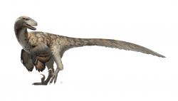 Moderní rekonstrukce vzezření dromeosauridního teropoda druhu Deinonychus antirrhopus. Tento raně křídový dravý dinosaurus stál na počátku tzv. Dinosauří renesance, při níž se v průběhu 70. a 80. let minulého století výrazně proměnil pohled vědecké i laické veřejnosti na druhohorní neptačí dinosaury. Letos v létě uplyne od jeho formálního popsání přesně padesát let. Kredit: Fred Wierum; Wikipedie (CC BY-SA 4.0)
