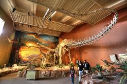 Rekonstruovaná kostra druhu Diplodocus hallorum, dříve známého jako Seismosaurus hallorum. Ačkoliv postavení nejdelšího známého dinosaura už dávno ztratil, i tak je tento sauropod se svými více než 30 metry délky nanejvýš impozantním tvorem. Kredit: Lee Ruk; Wikipedia (CC BY-SA 2.0)