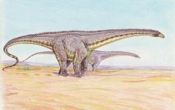 """Poněkud robustní varianta možného vzezření druhuDiplodocus hallorum. Ve skutečnosti byl tento diplodokid relativně štíhlým dinosaurem, který i při délce osmi osobních automobilů v řadě nevážil víc nežčtyři dospělí sloni. Typickým znakem byla nízká a poměrně dlouhá hlava i extrémně dlouhý, na konci """"bičovitě"""" zúžený ocas.Kredit:Dmitrij Bogdanov, Wikipedia (CC BY-SA 3.0)"""