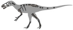 Zobrazené dochované části kostry druhu Eotyrannus lengi. Holotyp s označením MIWG 1997.550 byl zachovaný zhruba ze 40 % a představoval subadultní exemplář o celkové délce asi 4 metry. Tento evropský raně křídový tyranosauroid předcházel slavný druh T. rex zhruba o 60 milionů let. Kredit: Conty, Wikipedie (CC BY 3.0)