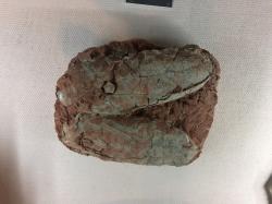 Obří zkamenělá vejce oviraptorosaurních teropodů spadající pod oorod Macroelongatoolithus, zde v expozici Geologického muzea v Číně. Tato až přes 60 centimetrů dlouhá vejce kladli dinosauři do kruhových hnízd o průměru kolem 3 metrů. Podobně mohla vypadat například i vajíčka obřích tyranosauridů. Kredit: BleachedRice; Wikipedie (CC BY-SA 4.0)