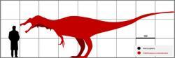 Stanovit celkové tělesné rozměry dinosaura na základě jediného dochovaného fosilního zubu je velmi obtížné, pomůže však srovnání s příbuznými a lépe zachovanými druhy. Na základě odvození rozměrů od známějšího druhu Baryonyx walkeri byla délka ostafrikasaura odhadnuta zhruba na 8 metrů. Kredit: PaleoGeekSquared; Wikipedie (CC BY-SA 4.0