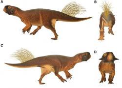 Rekonstrukce pravděpodobného vzezření a přibližného zbarvení malého rohatého dinosaura rodu Psittacosaurus. Vědecká studie z roku 2016 doložila, že tento malý východoasijský býložravec byl před dravými teropody pravděpodobně chráněn maskovacím zbarvením. Kredit: Vinther et al. (2016); Wikipedie (CC BY 4.0)