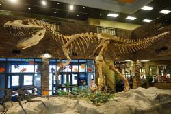 """Kostra druhu Torvosaurus tanneri, rekonstruovaná v expozici instituce Museum of Ancient Life(""""Muzeum starobylého života"""") ve městě Lehi na severu státu Utah. Samotná lebka těchto megalosauridů byla dlouhá až 1,4 metru. Kredit: Etemenanki3; Wikipedie (CC BY-SA 4.0)"""