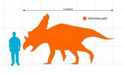 Silueta zobrazující přibližný tvar těla a velikost dospělého jedince utahceratopse v porovnání s člověkem. Lebka tohoto ceratopsida mohla dosahovat délky až 2,4 metru a patřila tedy k nejdelším známým lebkám u suchozemských živočichů vůbec (delšími lebkami se honosili jen někteří další ceratopsidi, jako byl Torosaurus latus nebo Eotriceratops xerinsularis). Kredit: Slate Weasel; Wikipedie (volné dílo)