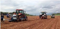 Na obrázku vidíte vzorově připravené pole pro pěstování rychle rostoucích dřevin – bez plevelů, či čehokoli zeleného. (Zdroj: http://www.smacr.cz/data/soubory-ke-stazeni/RRD.pdf)