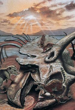 Úsvit nového světa před 66 miliony let. Primitivní savci prolézají lebkou ceratopsida triceratopse, připraveni projít evoluční radiací a převzít dominanci nad raně paleogenními pevninskými ekosystémy. Kredit: Mark Hallet