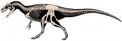 Kosterní diagram alosauridního teropoda druhu Allosaurus jimmadseni, velmi blízkého příbuzného druhu A. fragilis. Podobně asi vypadal i Epanterias amplexus, pokud se ovšem jedná o platný rod a druh. Je totiž možné, že epanterias představoval pouze odrostlého a tedy značně velkého jedince alosaura. Největší zástupci mohli být dlouzí asi 12 až 13 metrů, v případě zmíněného záhadného jedince z Colorada pak možná až kolem 15 metrů. Kredit: Scott Hartman; Wikipedie (CC BY 4.0)