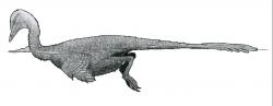 """Jedním z druhohorních neptačích dinosaurů, u nichž byla schopnost plavat velmi pravděpodobná, je i mongolský teropod Halszkaraptor escuilliei, formálně popsaný roku 2017. Tento malý opeřený dromeosaurid byl velký asi jako dnešní kachna a stavba jeho kostry nasvědčuje tomu, že byl zřejmě """"obojživelným"""" druhem dinosaura. Kredit: Tomopteryx; Wikipedie (CC BY-SA 4.0)"""