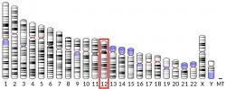 Proteinová kináza C-vázající protein NELL2jeenzym, který u lidí je kódovánNELL2genem. Tento gen kódujecytoplazmatickýprotein, který obsahujerepetice podobnéepidermálnímu růstovému faktoru(EGF).