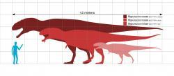 Mapusauři patřili k tzv. megateropodům, tedy obřím zástupcům skupiny Theropoda, kteří dosahovali délky nad 12 metrů a hmotnosti v řádu tun. Největší jedinci se velikostí blížili dalšímu obřímu karcharodontosauridovi z Argentiny, druhu Giganotosaurus carolinii. Jen lebka dosud rekordního exempláře mapusaura možná měřila na délku celých 180 centimetrů. Kredit: Slate Weasel; Wikipedie (volné dílo).
