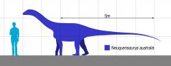 Jedním z možných původců kostřičky embrya je také menší titanosaurní sauropod Neuquensaurus australis, jehož fosilie byly formálně popsány pod rodovým jménem Titanosaurus již roku 1893. Tento patagonský zástupce čeledi Saltasauridae dosahoval v dospělosti délky nanejvýš 15 metrů a hmotnosti asi 10 000 kg, podle jiných odhadů pak dokonce jen 7,5 metru a zhruba 1800 kilogramů, což by z něj činilo jednoho z nejmenších známých titanosaurních sauropodů vůbec. Žil na území současné provincie Neuquén v době před asi 80 miliony let, není ale jisté, zda popsané embryo patřilo právě tomuto druhu. Kredit: Slate Weasel, Wikipedie (volné dílo)