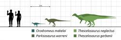 Thescelosaurusbyl podstatně větší a robustnější ornitopod než jeho příbuznýOrodromeus, o kterém víme takřka s jistotou, že vyhrabával podzemní nory. Dokázal to samé také o 30 milionů let mladší dinosaurus, žijící až na samotném rozhraní křídy a paleogénu? A mohla ho tato schopnost alespoň nakrátkozachránit před úplným vyhlazením po dopadu planetky Chicxulub?Kredit:Steveoc 86; Wikipedie (CC BY-SA 4.0)
