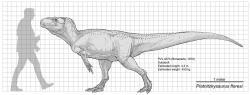 Porovnání velikosti holotypu piatnitzkysaura s dospělým člověkem (délka dinosaura 4,3 metru). Pravděpodobně se však jednalo o nedospělého jedince, který ještě nebyl plně dorostlý. Velcí dospělci tohoto rodu tak mohli být nejspíš ještě podstatně větší. Kredit: Paleocolour; Wikipedie (CC BY