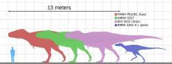 """Velikostní porovnání různě starých exemplářů druhu Tyrannosaurus rex. Nejmenší z nich, exemplář známý jako """"Jane"""", zahynul podle nových zjištění ve věku 13 let (předchozí odhad byl o dva roky nižší). V průběhu ontogenetického růstu se tyranosauři výrazně tvarově a velikostně proměňovali. Kredit: KoprX, Wikipedie (CC BY-SA 4.0)"""