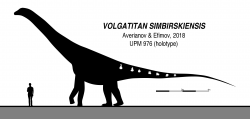 Silueta a zobrazení dochovaných fosilií u titanosaurního sauropoda druhu Volgatitan simbirskiensis. Tento středně velký sauropod obýval oblasti současné východní Evropy v období rané spodní křídy, asi před 130 až 133 miliony let. Při odhadované délce kolem 17 metrů dosahoval hmotnosti necelých 20 tun. Jeho význam ale tkví v něčem jiném – patří ke geologicky nejstarším známým titanosaurům celé severní polokoule. Kredit: Slate Weasel; Wikipedie (CC0)