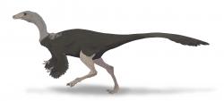 Tzv. pštrosí dinosauři, neboli ornitomimidi, byli gracilní a štíhle stavění teropodi, kteří evidentně dokázali velmi rychle běhat. Jak rychle konkrétně běželi a jak dlouho svoji maximální rychlost udrželi, to však zůstává otázkou i ve 21. století. Na ilustraci je rekonstrukce pravděpodobného vzezření východoasijského druhu Archaeornithomimus asiaticus, formálně popsaného v roce 1933 z území dnešního Vnitřního Mongolska v Číně. Kredit: Audrey.m.horn; Wikipedie (CC BY-SA 4.0)