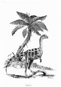 Vývojově primitivní dinosauři, jako byl sauropodomorf druhu Saturnalia tupiniquim, žijící v době před 233 miliony let na území současné Brazílie, ještě zdaleka nepatřili k dominantním formám suchozemských obratlovců. Čas dinosaurů přišel až o víc než třicet milionů let později, na přelomu triasu a jury. Kredit: Vladimír Rimbala, ilustrace k autorově knize Dinosauři – rekordy a kuriozity.