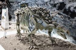 """Animantarx ramaljonesi byl jedním ze severoamerických nodosauridů, """"obrněných"""" býložravých dinosaurů, kteří patří k druhům nejlépe vybaveným pro aktivní obranu před predátory. Na rozdíl od svých příbuzných ankylosauridů však postrádali tzv. ocasní palici. Kredit: Kabacchi, Wikipedie (CC BY 2.0)"""