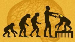 Co nám řeknou opice slidským mozkovým genem? Kredit: Ms. Tech; Evolution / Wikimedia Commons.