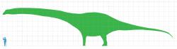 Silueta obřího argentinského dinosaura v porovnání s postavou dospělého člověka. Na základě ohromných kosterních elementů dinosaura bylo odhadnuto, že se jeho hmotnost nejspíš blížila stovce metrických tun. Pro přesnější odhad velikosti jednotlivých tělních částí nebo celkové hmotnosti však bohužel nemáme dostatečně kompletní vzorek fosilního materiálu. Kredit: Matt Martyniuk, Wikipedie