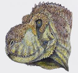 Rekonstrukce možného vzezření hlavy živého pyknonemosaura. Tento obří brazilský teropod žil v době před 70 miliony let a při devítimetrové délce představoval nejspíš dominantního predátora svých ekosystémů. Stejně jako ostatní vývojově vyspělí abelisaridi měl i pyknonemosaurus relativně krátkou a vysokou lebku s výraznou ornamentací. Kredit: Maurilio Oliveira, publ. Rafael Delcourt; Wikipedie (CC BY 4.0)