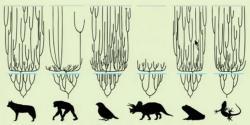 Kreacionismus paradoxně vyžaduje o mnoho řádů rychlejší průběh evoluce: Vpár tisíci letech od potopy světa se musely ze zachráněných druhů vyvinout miliony nových druhů živočichů a rostlin a dostat se na současná místa výskytu.