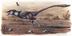 Rekonstrukce přibližného vzezření dakotaraptora, jednoho z největších a zároveň posledních známých dromeosauridů. Tento několikametrákový obr byl zřejmě na většině těla opeřený a nepochybně dokázal rychle běhat. Potravně snad mohl konkurovat mladým tyranosaurům. Kredit: Emily Willoughby, Wikipedie (licence CC BY-SA 4.0)