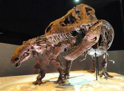 """Denversaurus byl součástí tzv. lancijské fauny, představující poslední populace neptačích dinosaurů na úplném konci křídového období v Laramidii. Zde v expozici muzea v Dallasu, spolu s exemplářem druhu T. rex, známém jako """"Wyrex"""" (zajímavého tím, že u něj byly poprvé v roce 2002 objeveny fosilní otisky kůže). Kredit: Daderot, Wikipedie (CC0)"""