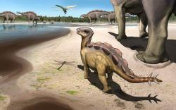 Umělecká představa stáda raně křídových stegosauridů (nejspíše wuerhosaurů) na území současné severozápadní Číny.Roztomile vypadající mládě stegosaurav popředí nepřesahuje délku jednoho metru a váží asi tolik, co menší pes. Podobná scéna se mohla odehrát přibližně před 130 miliony let, přesnější stáří fosilního otisku stopy stegosauřího mláděte zatím neznáme.Kredit:Kaitoge, University of Queensland.  https://tinyurl.com/yfotat3u